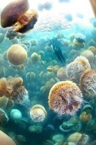 jellyfish-nomura-invasion