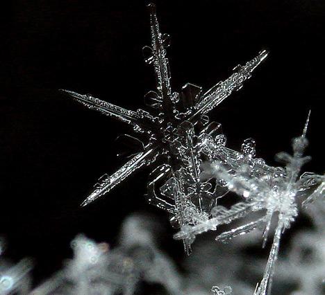 snowflakes_5sfw